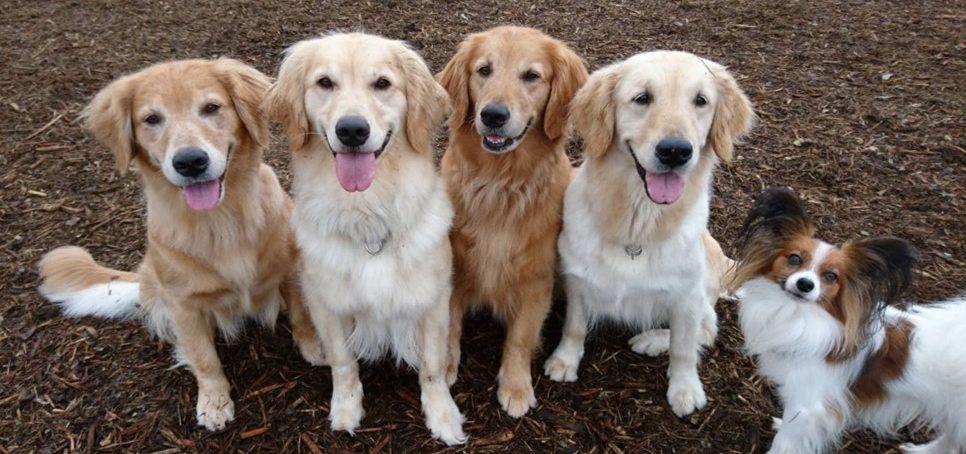 あなたと愛犬にぴったりの訓練コースをご用意