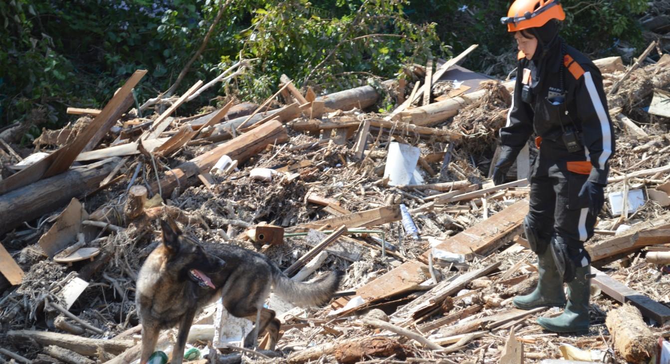 災害救助犬活動